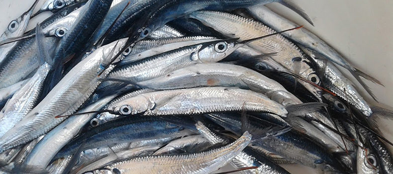 Fisheries Sector Receives Japanese Aid