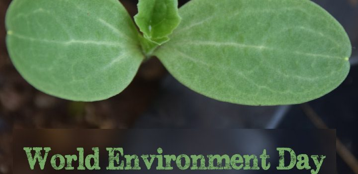 World Environment Day – June 5th